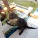palawan-small-clawed-otters