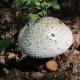 Interesting mushroom.