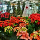 Poinsettias & Artificial Christmas Trees