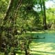 Bald Cypress Tree Knees in Swampy Area