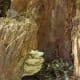 Mushrooms on tree stump