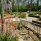 Area in Mercer Arboretum where cactus plants are displayed
