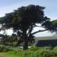 Cape Point, Cape Peninsula, South Africa