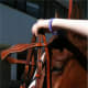 Guide the bit into the horses mouth with your right hand while lifting the headstall with your left hand.