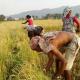 A paddy field in Nepal
