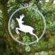 Roe Deer in Ring