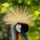5-birds-with-some-fun-headgear