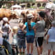 Then we followed the Chisholm Trail to the historic stockyards to watch a cattle drive. My kids were quite impressed by how long a longhorns horns actually are, and Lydia loved getting to see all the horses.