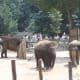 Elephants at the outdoor enclosure before renovation.