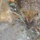 Hedgehog visiting the garden