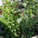 Medieval Style Vegetable Garden