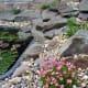 Alpine plants next to the wildlife pond
