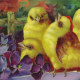 Yellow baby Easter chicks with violets