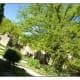 Herb Garden & Nostradamus' Oak