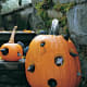 Jack O' Lantern Mouse House. Put a light on the inside and put plastic mice and rats coming out the holes.