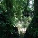 wonderboom-pretorias-1000-year-old-wonder-tree