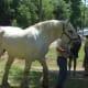 Massignac horse faire