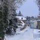 Videix in the snow