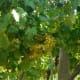 Increasing numbers of vineyards offer internships.