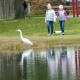 Great egret and two little girls