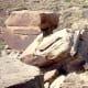 Petroglyphs on rocks in the Painted Desert