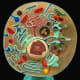 This fake-colour model shows all the major organelles of the animal cell, as well as a cut-away of the nucleus