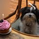 """Cricket on her first birthday.  Don't worry.  She only had a tiny bite because a lot of friends shared her """"cake."""""""