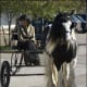 i-love-black-friesians-and-gypsy-vanners