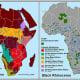 Distribution of black rhino