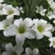fulaich-the-festival-of-flowers-in-kinnur