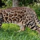 top-10-most-dangerous-exotic-animals-you-can-legally-own-in-india