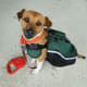 """""""Really? Do I have to wear a backpack? It really distracts me from all those squirrels..."""""""