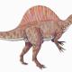 Spinosaurus - meat eater