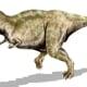 Tyrannosaurus Rex - meat eater
