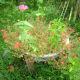 Portulaca grandiflora with Zinnia Elegans and Pepper plant