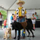 One of the winning entries at the dog costume contest