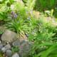 rock boarder & wildflowers