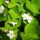 a-moss-garden