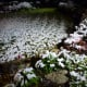 Snowy backyard at around 5 A.M.