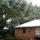 Snow on our roof and in the trees above around 9 A.M.