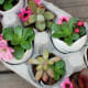 Succulent eggshell arrangement