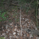 esclata-sang-and-mushroom-picking-in-mallorca