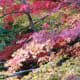 Tamozawa's maples in fall.