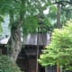 300 year old cherry tree, Tamozawa villa.