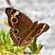 send-me-butterflies