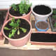 Planters with new transplants, seeds and garlic cloves, set up on our new pallet planter platform for easy rotation.