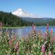 Mount Hood towering behind Trillium Lake