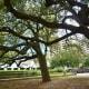Trees in Antioch Park