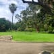The wondrous old trees within the Royal Botanic Garden.