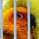 Store mascot bird